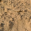 Unscreened Fill Sand-Per Yard